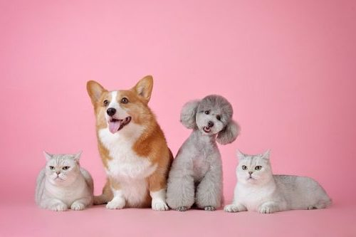 vermifuge chien et chat